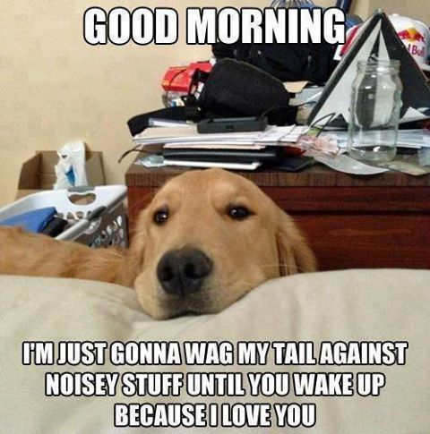 Dog meme good morning...